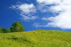 ニッコウキスゲ咲く丘