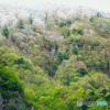 新緑の季節 11