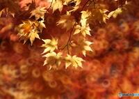 CANON Canon EOS 6Dで撮影した(秋景拾遺 1)の写真(画像)