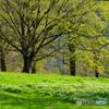 新緑の季節 5