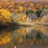 秋の池めぐり 19