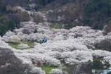 桜のある光景1 天狗の花見