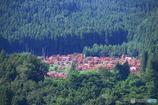 サルスベリの丘