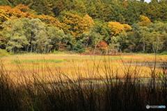 秋の池めぐり 8