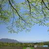 新緑の季節 2