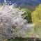 桜のある光景 5 うつろい