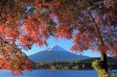 河口湖 紅葉まつり