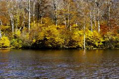 晩秋の鎌池
