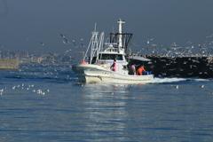 イカナゴ漁