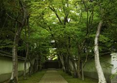 新緑の慈眼寺