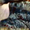 飛び石に浮かぶ12月の雨上がり(花水木の庭)s