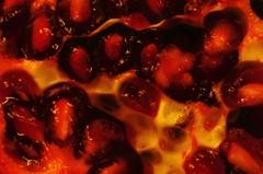 pomegranate(croquis)