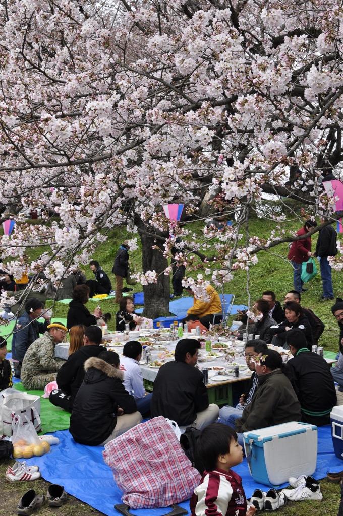これぞ、日本の花見