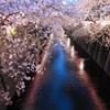 ナカメの夜桜