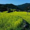 徳島県神山町 菜の花の里