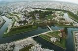 桜☆STAR