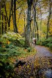 秋雨の散策路