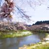 桜並木@石川町