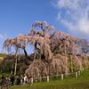 今さら滝桜2