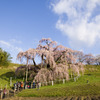今さら滝桜3