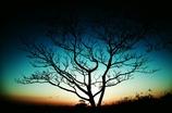 sollow tree