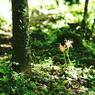 PENTAX PENTAX K-rで撮影した風景(cluster amaryllis)の写真(画像)