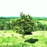 PENTAX PENTAX K-rで撮影した風景(extend trees)の写真(画像)