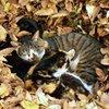 木の葉隠れお休みの術
