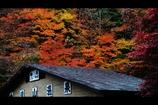 屋根と紅葉6
