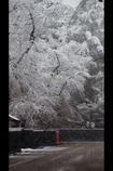 角館冬景色3