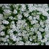 初夏の花14