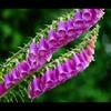 初夏の花15