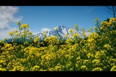 春:鳥海山4