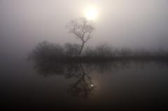濃霧の福島潟2