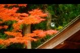 屋根と紅葉5