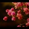 花の季節が待ち遠しい