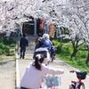 桜のトンネルを抜けて・・