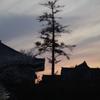 夕焼けの一本木