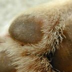 NIKON E950で撮影した動物(肉球)の写真(画像)