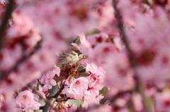 春満喫 2