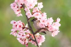 春満喫 3