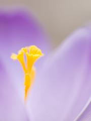 春色ラッパ