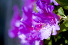 花の色は足早に、、、 01