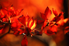 秋色集め 06