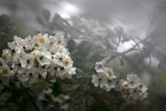 雨中走行会 05