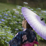 花菖蒲祭り 06