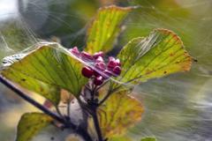 秋色の誘惑 02