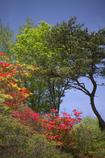 徳仙丈山 04