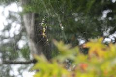 秋色の誘惑 01