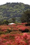 徳仙丈山 03